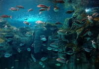 Get a rental car to discover Cretaquarium Heraklion, Crete